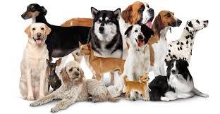 خرید سگ خانگی