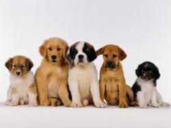 مرکز خرید سگ تهران